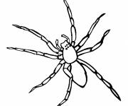 Coloring pages Spider front view