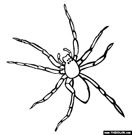 Free coloring and drawings Spider front view Coloring page