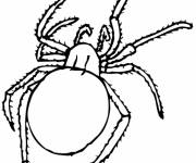 Coloring pages Spider insect