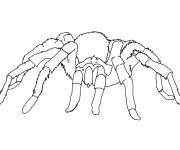 Coloring pages Spider moves