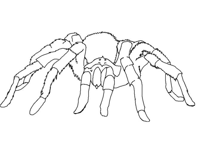 Free coloring and drawings Spider moves Coloring page