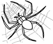 Coloring pages Spider on Canvas Predator insect