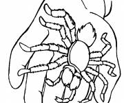 Coloring pages Spider on hand