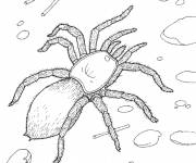 Coloring pages Spider on the ground