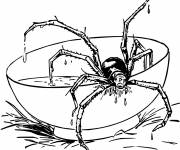 Coloring pages Spider on the Table