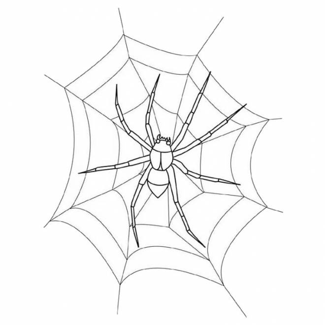 Free coloring and drawings Spider on the web in white Coloring page