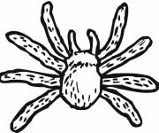 Coloring pages Tarantula spider
