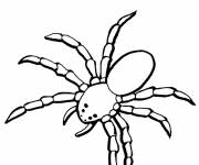 Coloring pages Terrestrial spider