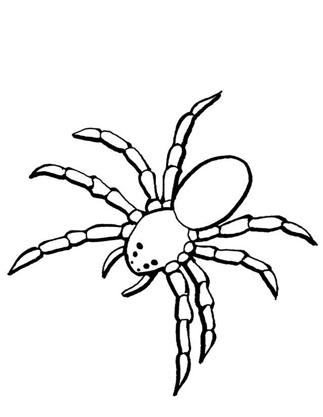 Free coloring and drawings Terrestrial spider Coloring page
