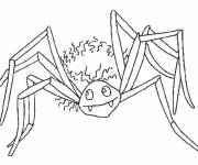 Coloring pages Vampire spider