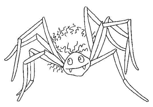 Free coloring and drawings Vampire spider Coloring page