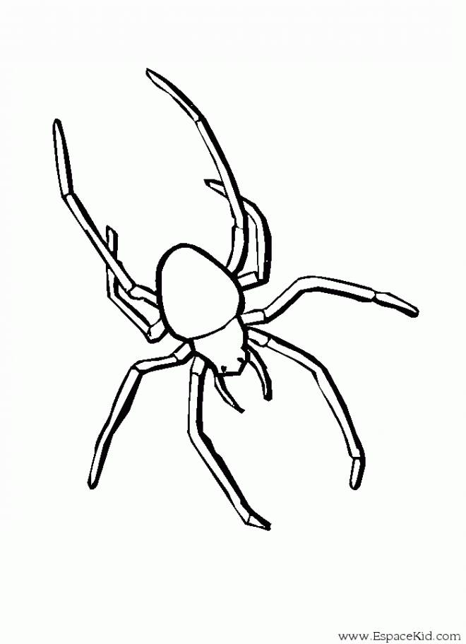 Free coloring and drawings Vector spider Coloring page