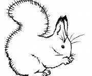 Coloring pages A drawing of a beautiful Squirrel