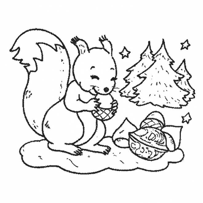 Free coloring and drawings A drawing of Squirrel in black and white Coloring page