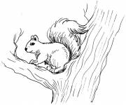 Coloring pages An animal Squirrel