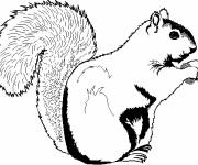 Coloring pages Coloring Squirrel to print