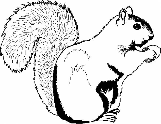 Free coloring and drawings Coloring Squirrel to print Coloring page