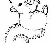 Coloring pages Cute Squirrel drawing