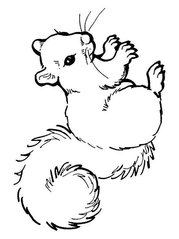Free coloring and drawings Cute Squirrel drawing  Coloring page
