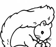 Coloring pages Drawinf of Squirrel's face