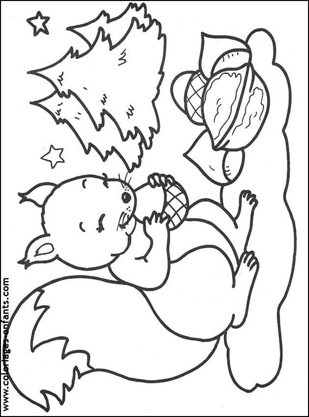 Free coloring and drawings european Squirrel  Coloring page