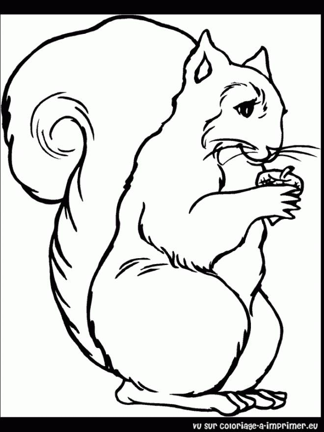 Free coloring and drawings Funny Squirrel Coloring page