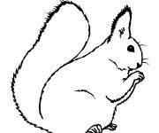 Coloring pages Squirrel and family