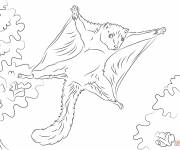 Coloring pages Squirrel and the tree