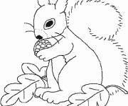 Coloring pages Squirrel beautiful