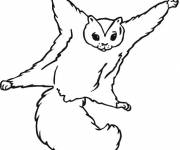 Coloring pages Squirrel face