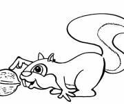 Free coloring and drawings Squirrel for boys Coloring page
