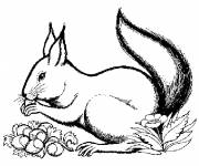 Coloring pages Squirrel in gray