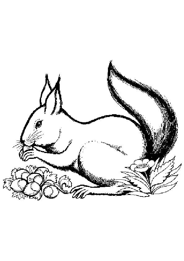 Free coloring and drawings Squirrel in gray Coloring page