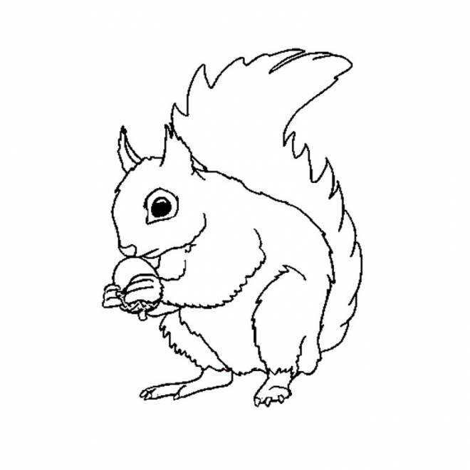Free coloring and drawings Squirrel magnificient Coloring page