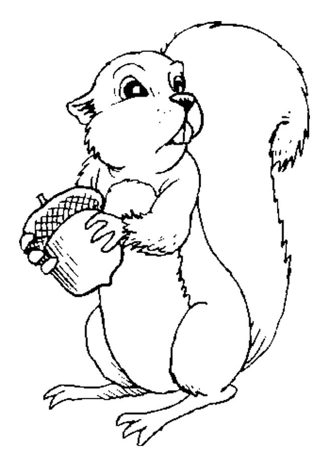Free coloring and drawings Squirrel online Coloring page