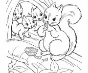 Coloring pages Squirrel's face coloring