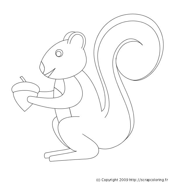 Free coloring and drawings Squirrel to color Coloring page