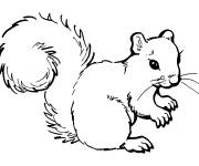 Coloring pages Squirrel to color and save