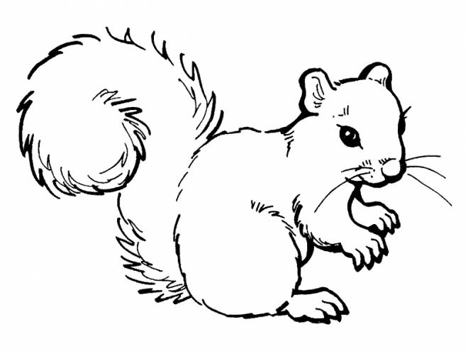 Free coloring and drawings Squirrel to color and save Coloring page