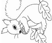 Free coloring and drawings Squirrel to complete Coloring page