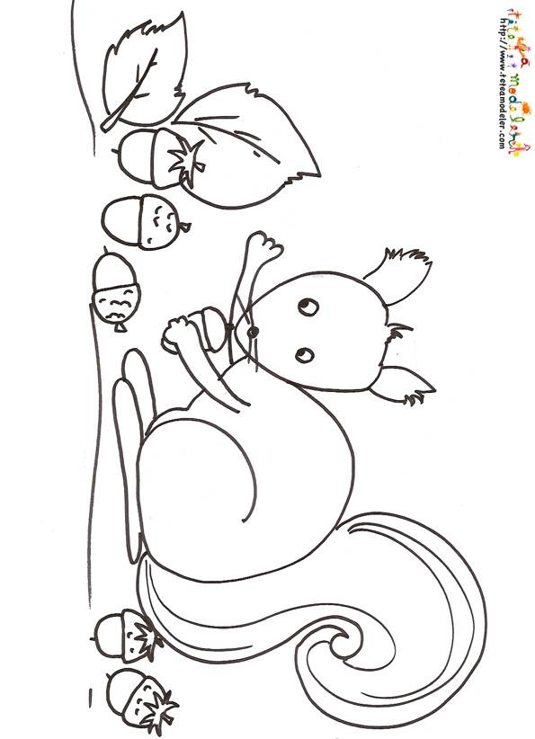 Free coloring and drawings Squirrel to download Coloring page