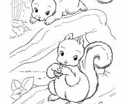 Coloring pages Squirrel to draw
