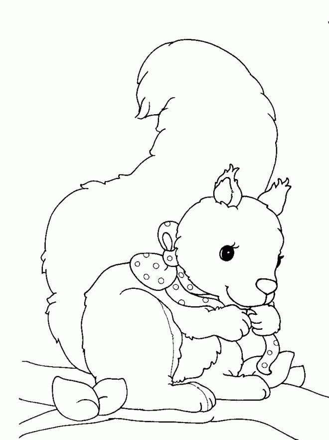 Free coloring and drawings Squirrel to print Coloring page
