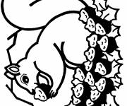 Coloring pages Squirrel tree