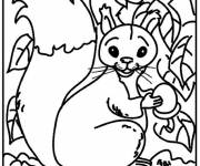 Coloring pages Squirrel wallpapers