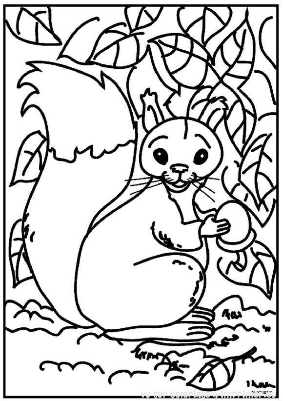 Free coloring and drawings Squirrel wallpapers Coloring page