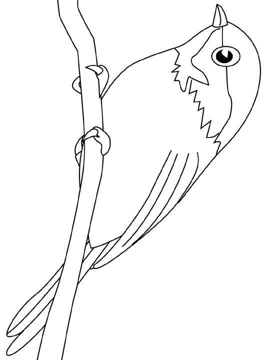 Free coloring and drawings A little swallow Coloring page