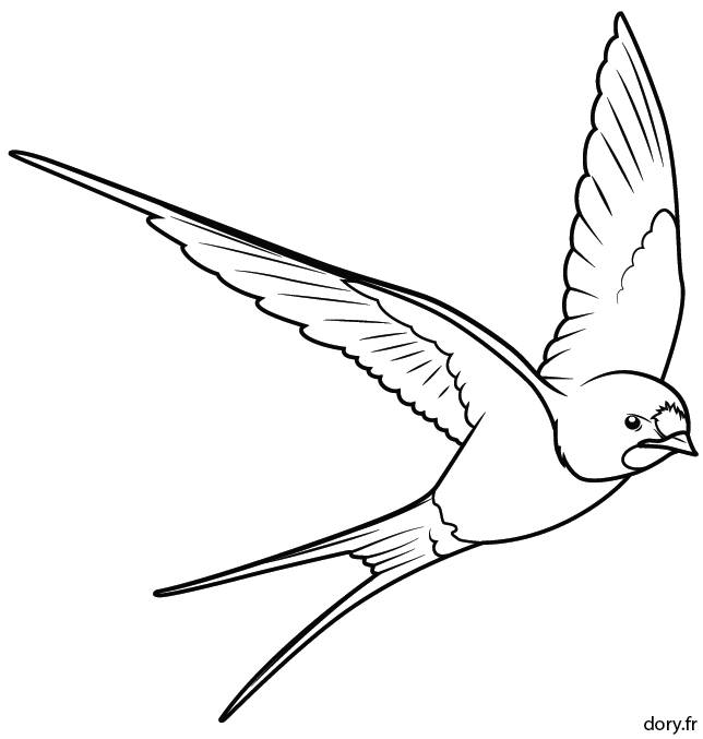 Free coloring and drawings Black and white swallow Coloring page