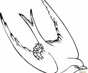 Free coloring and drawings Color swallow Coloring page