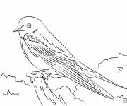 Coloring pages Cute swallow
